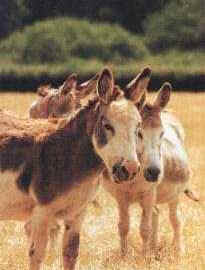 Click to visit the UK Donkey Sanctuary site.