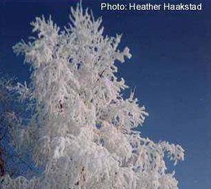 Hoar-frost.  Click to learn about Canada, where they get hoar-frost!  Brrrrr!