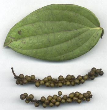 black pepper with leaf