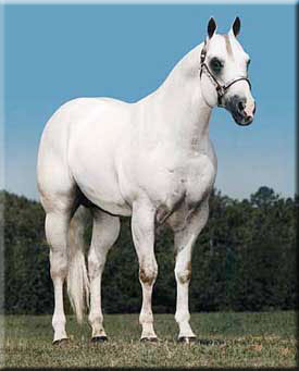 A beautiful quarter horse.