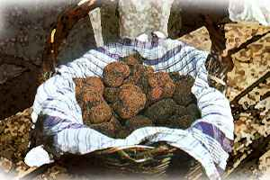A basket of fresh truffles.  Mmmmmmmmmm!