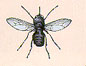 The tsetse fly.  Click for more information on it and the disease it carries.